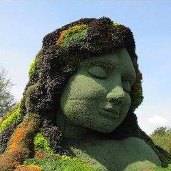 威海五色草造型超乎你的想象