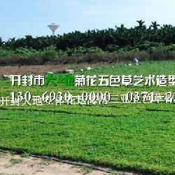海南三亚五色草种种苗植基地