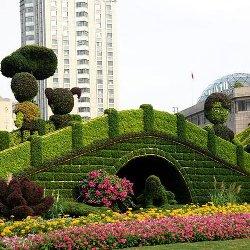 上海最美五色草造型